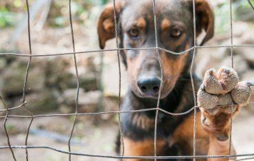 Pomóż bezdomnym zwierzakom w Orzechowcach