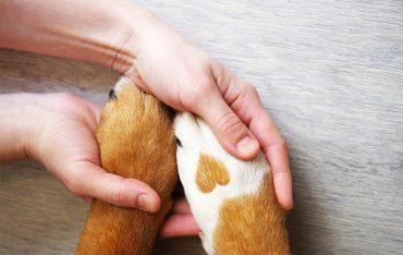 Charytatywna akcja na rzecz Schroniska dla Bezdomnych Zwierząt w Orzechowcach