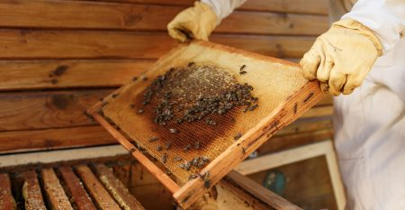 Hands Of Beekeeper Pulls Out From The Hive A Wooden Frame With H